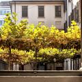 Urban Bower. Milan, Italy. by Claudio Lepri