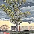 Urban Cottonwood by Gary Richards