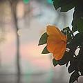 Urban Flora by Jenny Revitz Soper