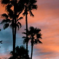 Urban Palms by Peter Breaux