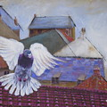Urban Pigeon by Shirley Wellstead