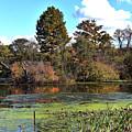 Urieville Pond by Skip Willits