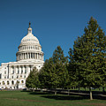 Us Capitol Trees Washington Dc by Lawrence S Richardson Jr