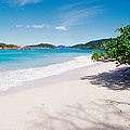 Us Virgin Islands, St. John, Cinnamon by Panoramic Images