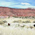 Utah 7 by Will Borden