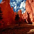 Utah - Bryce Canyon by Terry Elniski