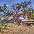 Utah Juniper On The Climb To Delicate Arch Arches National Park by Roger Passman