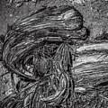 Utah Juniper Remains  by Roger Passman