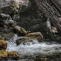 Utah Stream by Buck Buchanan