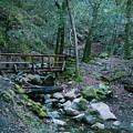 Uvas Canyon Bridge by Eden Feil