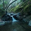 Uvas Canyon Waterfall II by Eden Feil