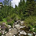 Vail Stream In The Summer 2 by Madeline Ellis
