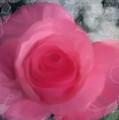 Valentine by Lisa  Westrope