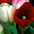 Valentine Tulips by Kathy Yates