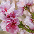 Valley Blossoms by Ao Images