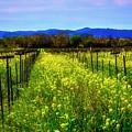 Valley Vineyards by Garry Gay