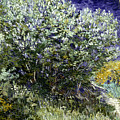 Van Gogh: Lilacs, 19th C by Granger