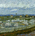 Van Gogh: Peach Tree, 1889 by Granger