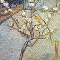 Van Gogh: Peartree, 1888 by Granger