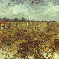 Van Gogh: Vineyard, 1888 by Granger