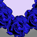 Varas Rose 30 by Per Lidvall