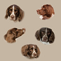 Variations Of A Spaniel by Linsey Williams