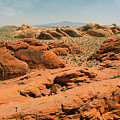 Vast Desert Valley Of Fire by Frank Wilson