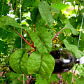 Vegetable Growing In Used Water Bottle 10 by Jeelan Clark