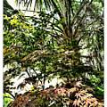 Vegetation Takeover by Joan  Minchak