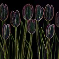 Velvet Tulips by Deborah J Humphries