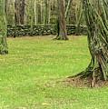 Venerable Trees And A Stone Wall by Nancy De Flon