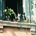 Venetian Cats by Lauri Novak