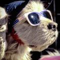 Venice Beach Dog by Samuel M Purvis III