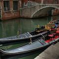 Venice Portrait by Michael Kirk