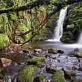 Vennford Waterfall On Dartmoor In Spring by Pete Hemington