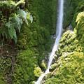 Ventana Wilderness by Soli Deo Gloria Wilderness And Wildlife Photography