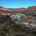 Verde Canyon Oasis by Susie Weaver