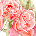 Vermilion Pink Roses by Alexis Grone