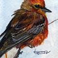 Vermillion Flycatcher by Jimmie Trotter