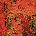 Vermont Autumn by Boyd Norton