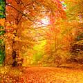 Vermont Autumn by Vicky Brago-Mitchell