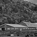 Vermont Farm With Cows Autumn Fall Black And White by Toby McGuire