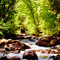 Vermont Trout Brook by Frank Wilson