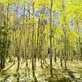 Vertical Aspen Forest by Barbara Stellwagen