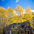 Vertical Shot Of Meagher's Cabin by Daniel Brunner