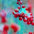 Very Berry by Stewart Helberg