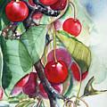 Very Cherry by Vicky Lilla