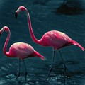 Very Pink Flamingos by DigiArt Diaries by Vicky B Fuller