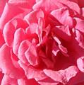Very Pink Mini by Liz Vernand
