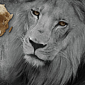 Very Sad Lion, Cry For Africa by Maria Astedt